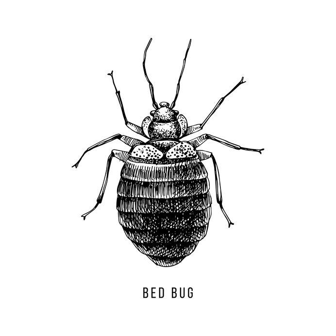 locating bed bugs Denver